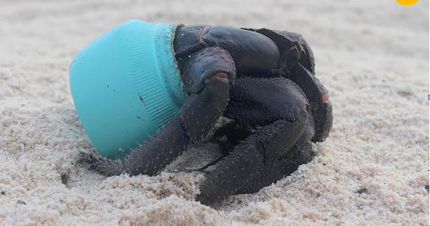 38 مليون قطعة من نفايات البلاستيك على جزيرة غير مأهولةٍ فى المحيط الهادئ
