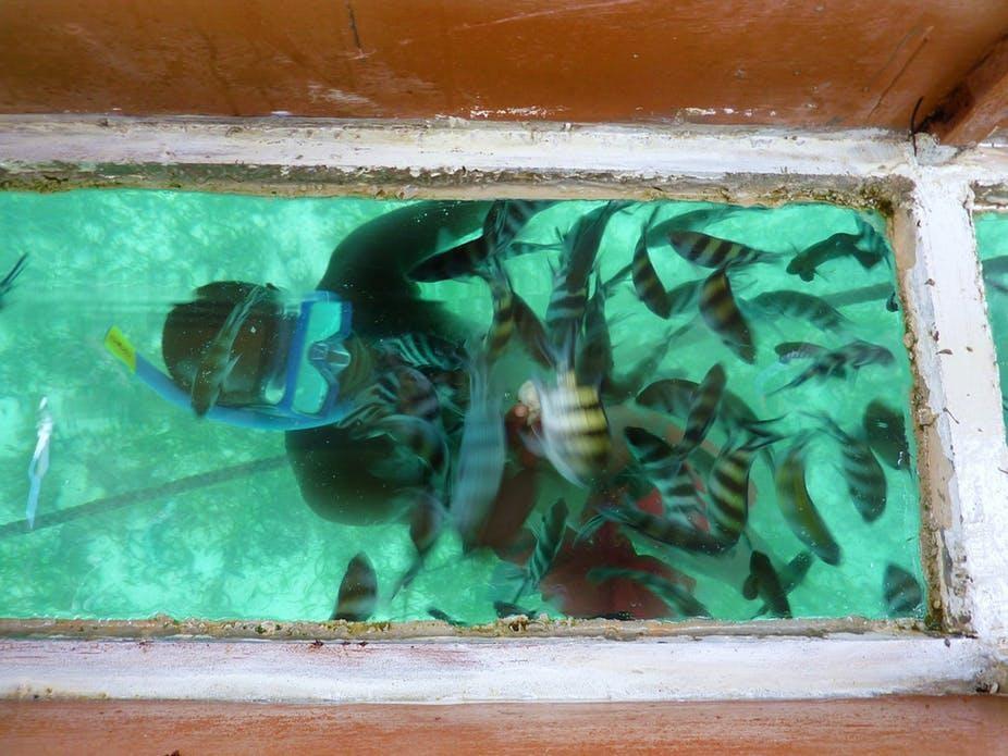 ماذا يمكن لحكومة كينيا أن تفعل لحماية والاستفادة من موارد المحيط؟