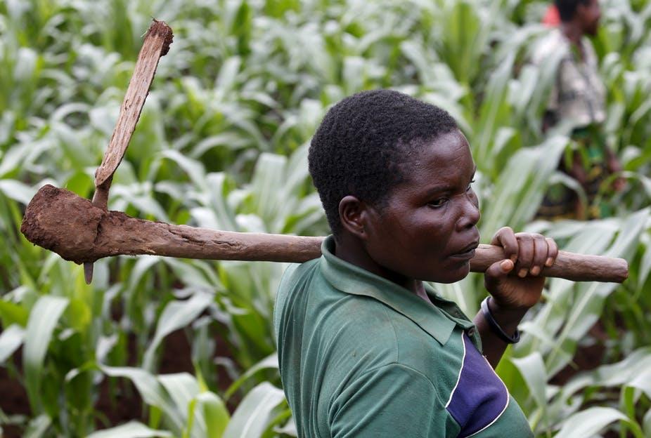 كيف يمكن للجوائز أن تشجع المزارعين الأفارقة على تبني الابتكار؟