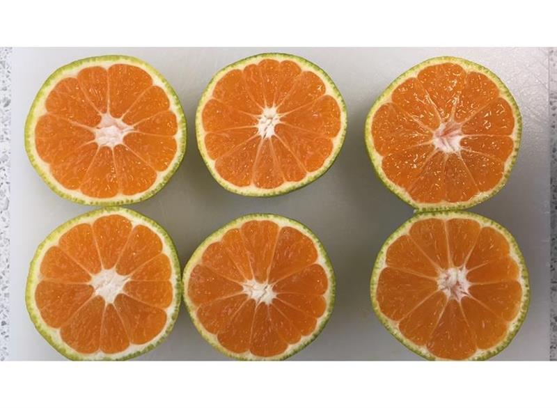 لخفض بقايا الأغذية: شركة تيسكو تبيع ثمار الساتوسما والكلمنتين الخضراء