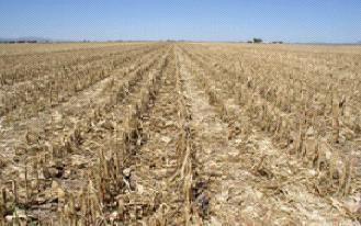 طرق إنتاج الغاز الحيوي من النفايات الزراعية