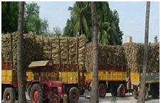 السمات البارزة لصناعة السكر في موريشيوس