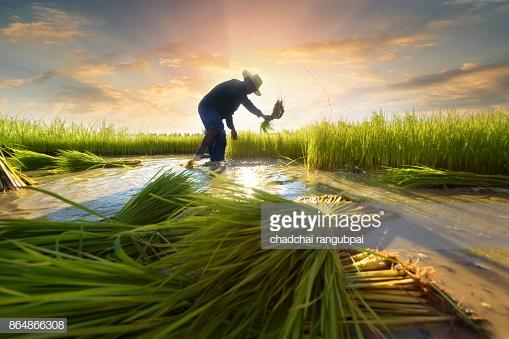 هل بالإمكان إنتاج وقود حيوي باستخدام المخلفات الزراعية؟