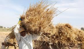 دراسة اقتصادية لإعادة تدوير المخلفات الزراعية في مصر
