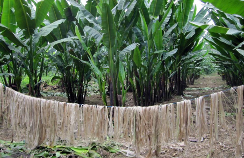 كيف يمكننا تحسين سبل عيش صغار المزارعين؟