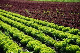 إعادة تدوير النفايات الحيوانية بوسائل صديقة للبيئة لزيادة ربحية المزرعة