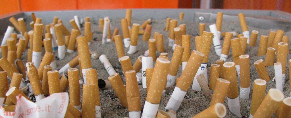 """"""" أعقاب السجائر"""" هي رأس مال تلك الشركة!"""